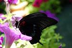 Выставка Бабочек в Одессе
