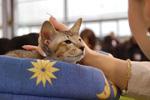 Фотографии с выставки кошек в Одессе