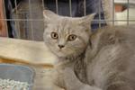 Фотографии с выставки кошек