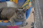 Фотографии с выставки котов