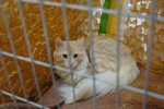 Фотографии с Международной выставки кошек