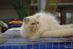 Международная выставка кошек 22-23 сентября в Одессе